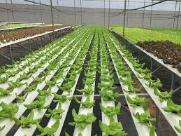 Nâng giá trị hàng nông sản bằng khoa học công nghệ (25/8/2019)