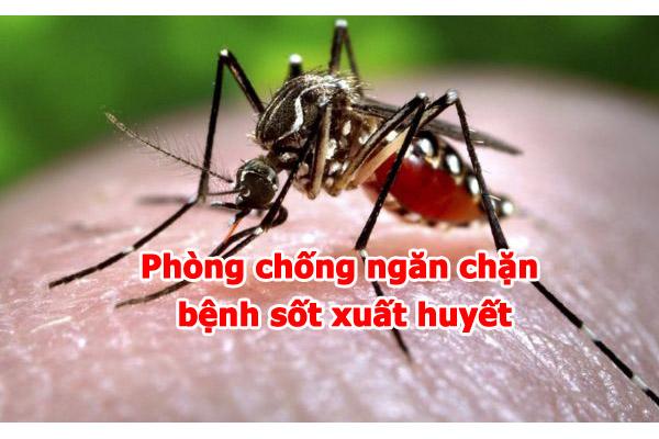 Cách phòng tránh bệnh sốt xuất huyết (12/8/2019)