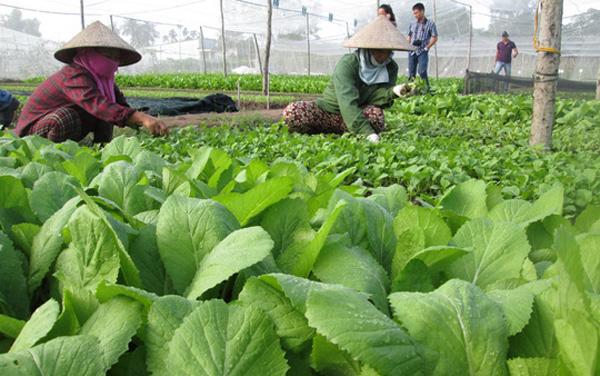 Sử dụng phân bón hữu cơ để có nền nông nghiệp an toàn (29/8/2019)
