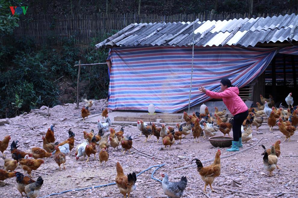 Chăn nuôi nhỏ lẻ và nhận thức trong công tác phòng chống bệnh cúm gia cầm (27/8/2019)