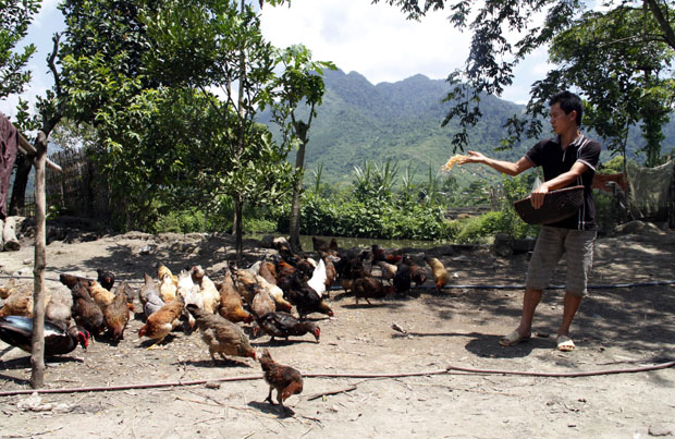 Tuyên truyền nâng cao nhận thức người chăn nuôi trong phòng chống cúm gia cầm (26/9/2019)