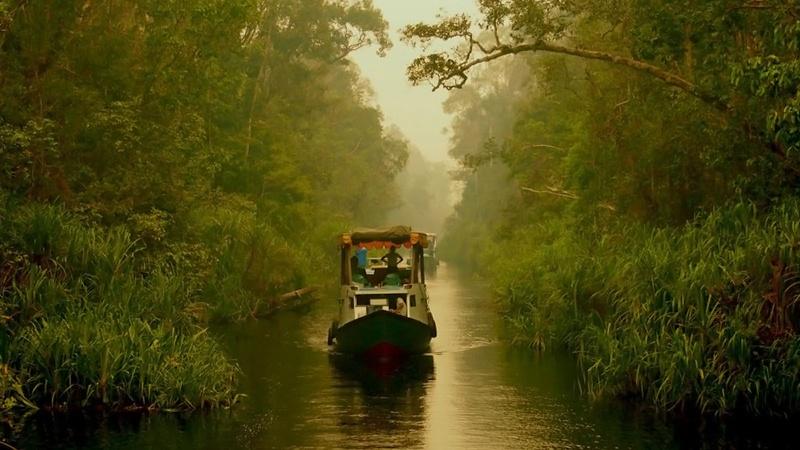 Indonesia chuyển thủ đô có thể gây khủng hoảng mới đối với môi trường sinh thái trên đảo Borneo (10/9/2019)