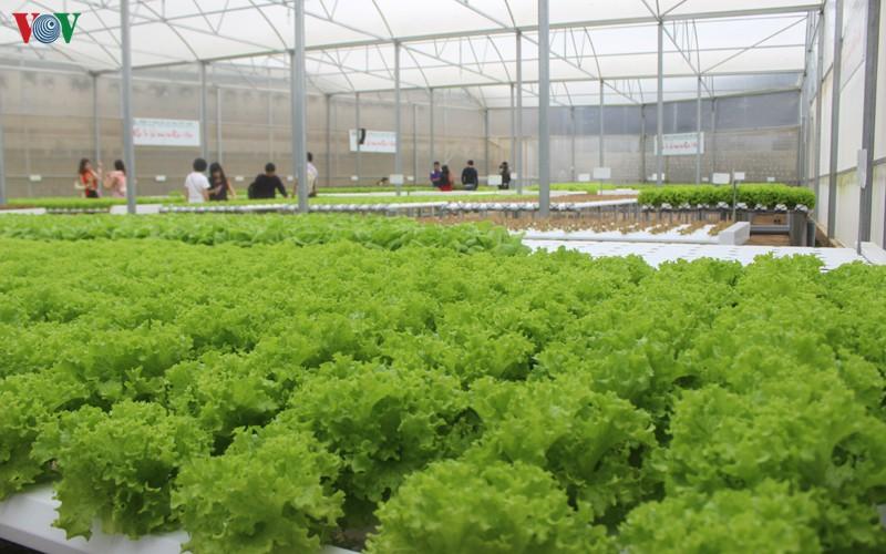 Nông nghiệp công nghệ cao thay đổi từ tư duy sản xuất (28/9/2019)