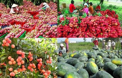 Để nông sản Việt đi theo tín hiệu của thị trường (17/9/2019)