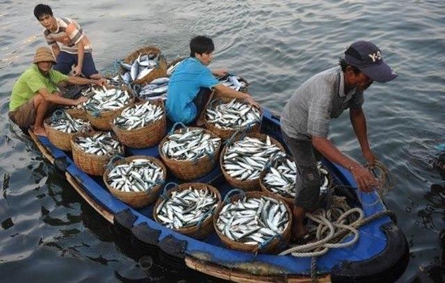 Hợp tác nghề cá vì sự phát triển bền vững trên biển Đông (9/1/2020)