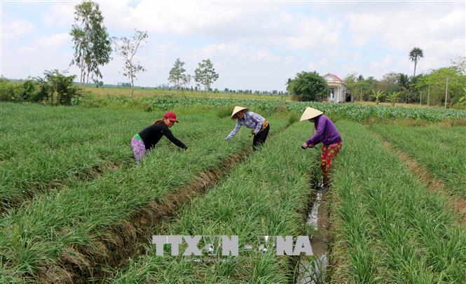 Chuyển đổi cơ cấu cây trồng thích ứng với biến đổi khí hậu (22/1/2020)