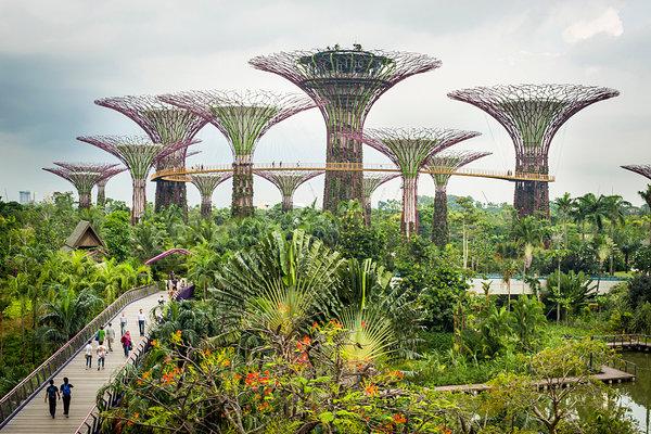 Singapore sản xuất dầu cọ thân thiện với môi trường, hướng tới mục tiêu trở thành quốc gia đầu tiên trên thế giới chỉ sử dụng dầu cọ