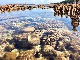 Bảo vệ đa dạng sinh học vùng biển ven bờ trước biến đổi khí hậu (8/1/2020)