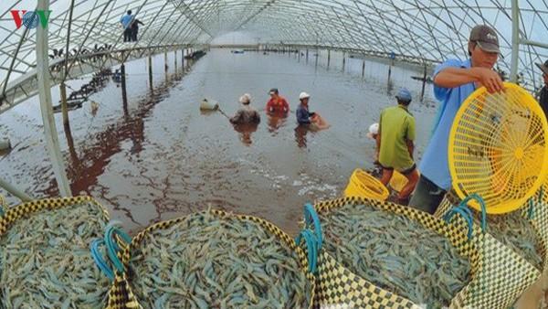 THỜI SỰ 6H SÁNG 5/1/2020: Tổng giá trị xuất khẩu nông, lâm, thủy sản năm 2019 ước đạt hơn 41 tỷ USD.