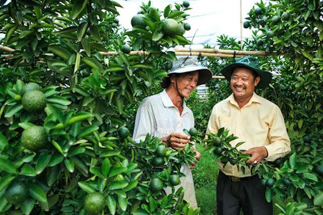 """Bình Dương: """"Trái ngọt"""" từ Chính sách khuyến khích doanh nghiệp đầu tư vào nông nghiệp công nghệ cao (9/10/2020)"""
