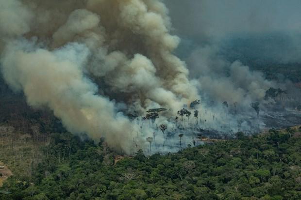 Tổ chức quốc tế về bảo tồn thiên nhiên đẩy mạnh khôi phục tự nhiên (20/10/2020)