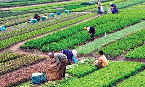 Đẩy mạnh chuỗi liên kết sản xuất tạo bước đột phá cho nông sản chất lượng cao (Ngày 24/11/2020)