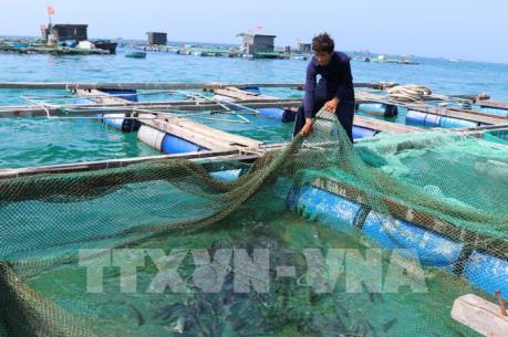 Phát triển nuôi hải sản trên biển ở các địa phương (6/2/2020)
