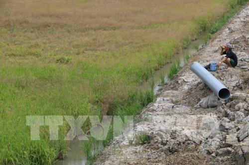 Sản xuất nông nghiệp đồng bằng sông Cửu Long ứng phó với hạn mặn kỷ lục (19/2/2020)