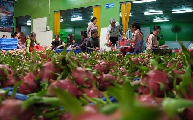 Tháo gỡ khó khăn cho xuất khẩu nông sản trước dịch virus Corona (7/2/2020)
