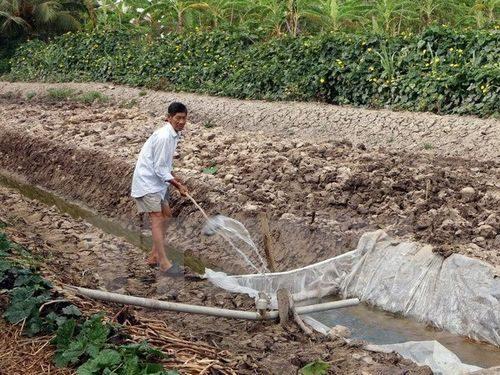 Các tỉnh đồng bằng sông Cửu Long ứng phó với hạn mặn (12/2/2020)