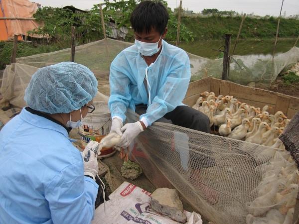 Những biện pháp phòng chống dịch cúm gia cầm hiệu quả (18/2/2020)