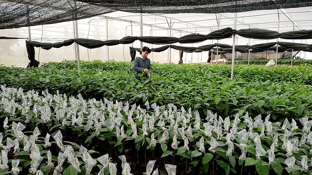 Giống cây trồng, đổi mới để tăng hiệu quả sản xuất (9/2/2020)