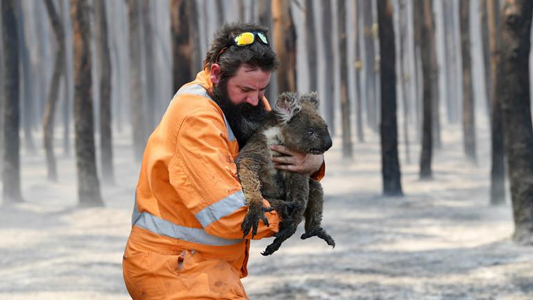 Australia nỗ lực cứu động vật hoang dã sau cháy rừng (3/2/2020)