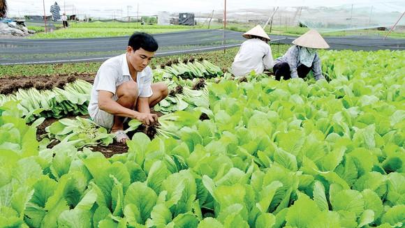 Sản xuất nông nghiệp thích ứng với biến đổi khí hậu (28/2/2020)