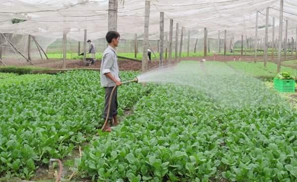 Động lực nào tạo nên sự bứt phá cho nông nghiệp 2020?