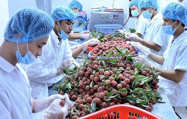 Hiệp định Thương mại Tự do Việt Nam - Liên minh Châu Âu (EVFTA) được thông qua: Cú hích cho xuất khẩu nông sản Việt (20/2/2020)