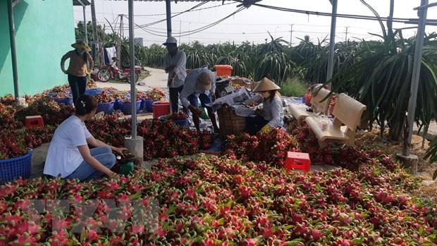 Xuất khẩu nông sản gặp khó khăn vì virus corona (5/2/2020)