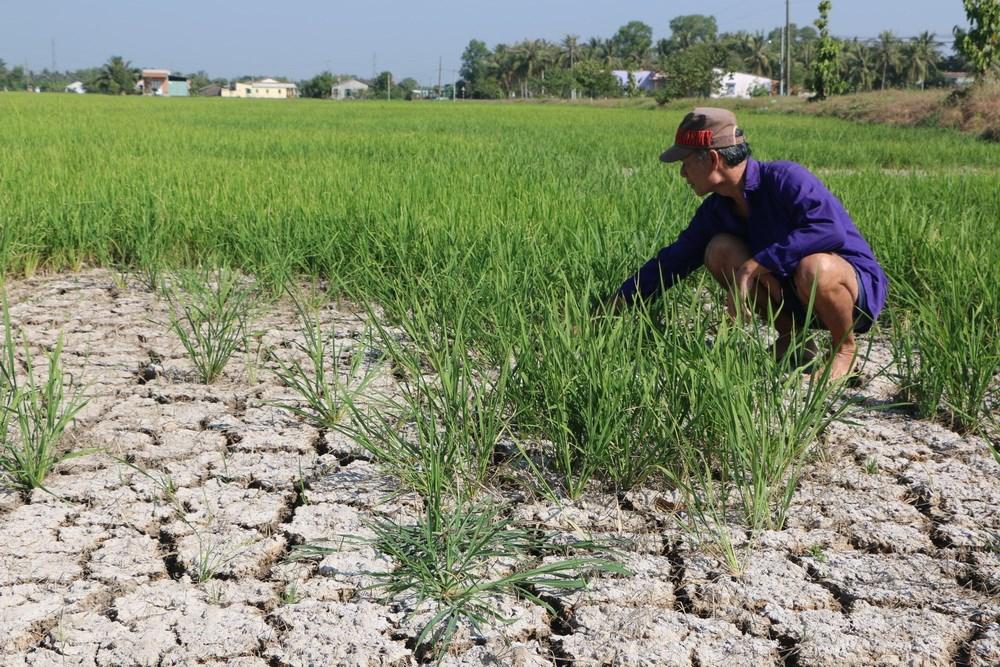 THỜI SỰ 6H SÁNG 12/2/2020: Thắng lợi bước đầu trong ứng phó với hạn mặn ở đồng bằng sông Cửu Long.