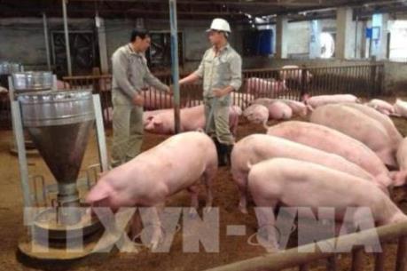 Tái đàn chăn nuôi gắn với liên kết chuỗi (3/3/2020)