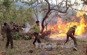 Tăng cường phòng chống cháy rừng mùa hanh khô 911/3/2020)
