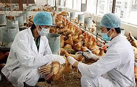 THỜI SỰ 18H CHIỀU 10/3/2020: Thủ tướng Chính phủ ban hành Chỉ thị về tập trung triển khai quyết liệt, đồng bộ các giải pháp phòng, chống dịch bệnh gia súc, gia cầm.