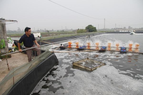 Gặp gỡ người đầu tiên ở Việt Nam thuần hóa và nuôi thành công cá vược (11/3/2020)