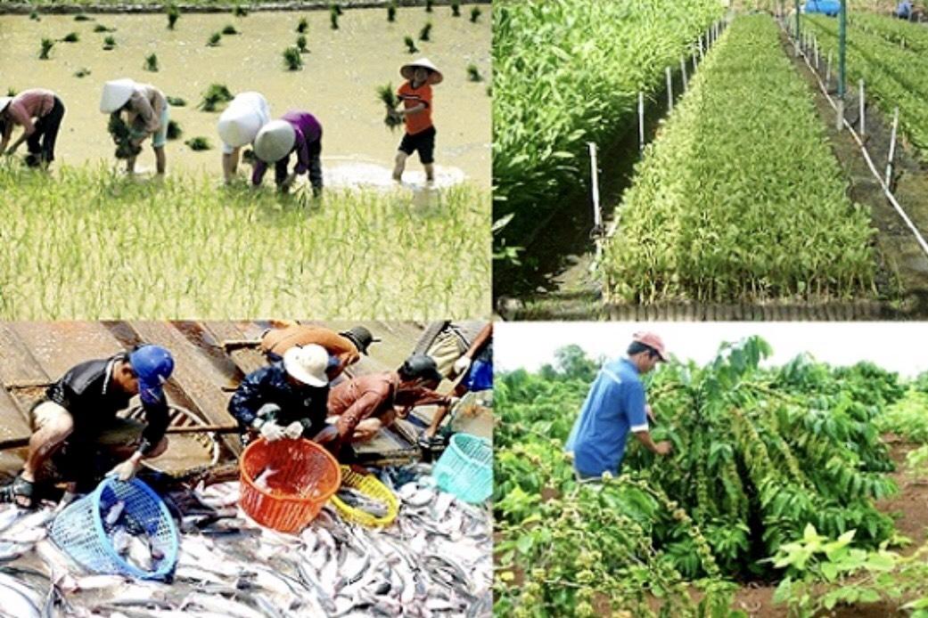 Nông nghiệp vẫn là trụ đỡ nền kinh tế thời dịch bệnh (17/3/2020)