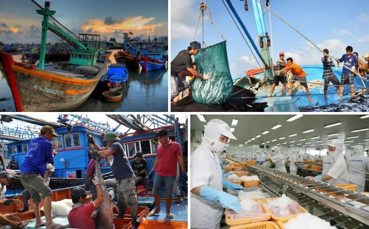 Nhiều địa phương chủ động khắc phục thẻ vàng của Ủy ban Châu Âu đối với khai thác hải sản (19/3/2020)