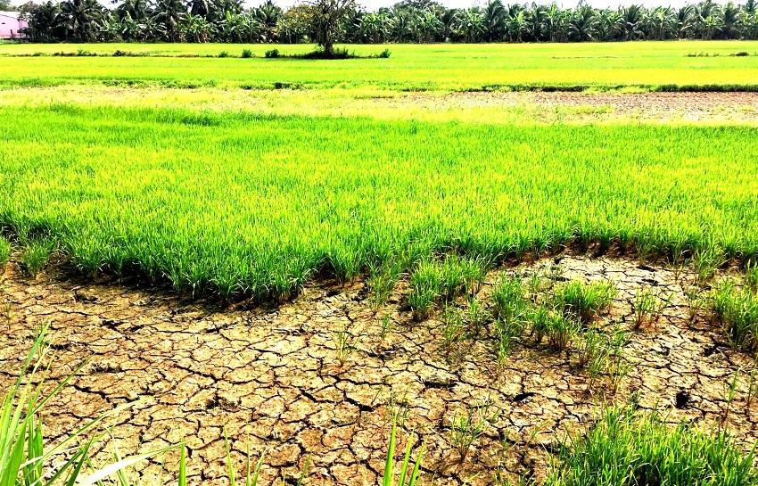 Các tỉnh đồng bằng sông Cửu Long chủ động phương án ứng phó với hạn mặn (4/3/2020)