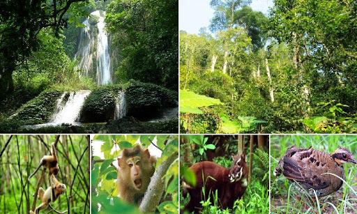 Tri thức truyền thống về nguồn gen trong bảo tồn và sử dụng bền vững đa dạng sinh học (1/4/2020)
