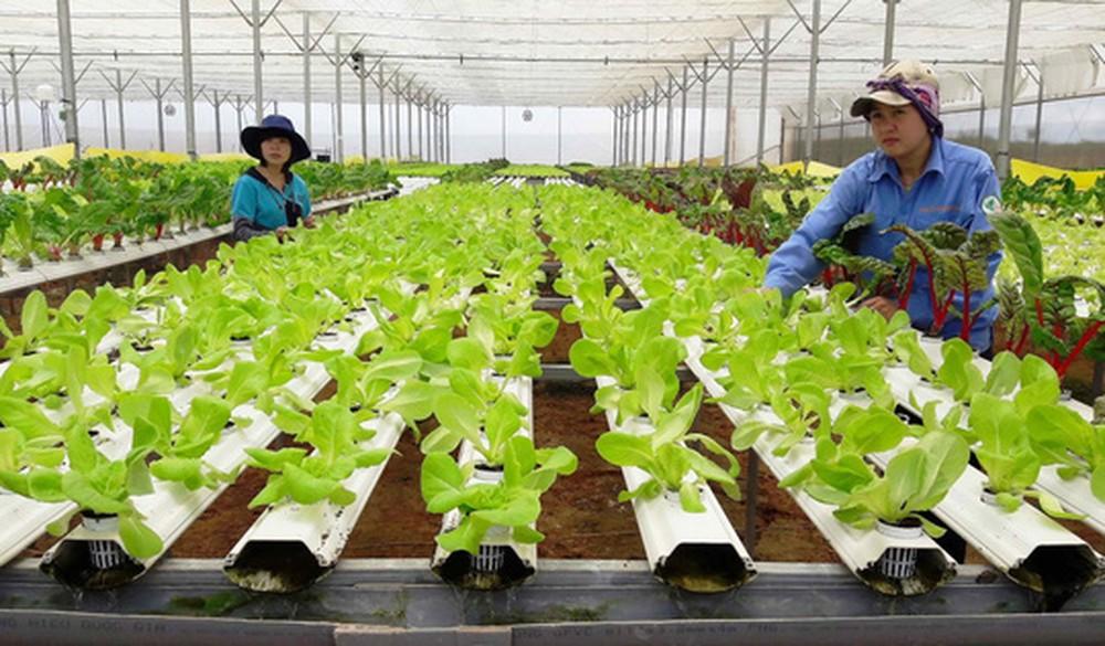 Phát huy hiệu quả hoạt động của Hợp tác xã nông nghiệp (18/4/2020)
