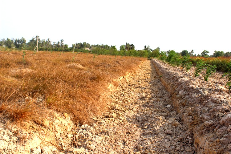 Giải pháp nào hạn chế thiệt hại do hạn hán, xâm nhập mặn tại Đồng bằng sông Cửu Long? (29/4/2020)