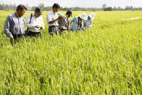 Đồng bằng sông Cửu Long đảm bảo hiệu quả sản xuất vụ hè thu (15/4/2020)