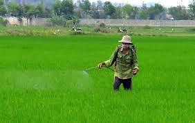 Chủ động phòng trừ bệnh hại lúa Đông Xuân (2/4/2020)