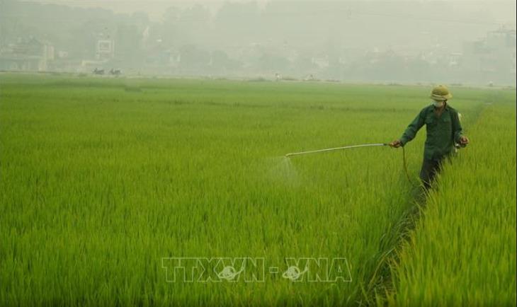 Tăng cường phòng chống sâu hại trong Vụ Đông Xuân 2020 (8/4/2020)
