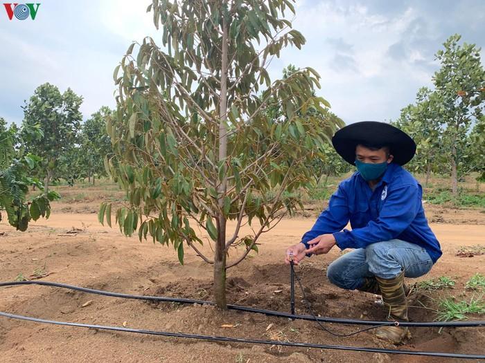 Tây Nguyên đối mặt với khô hạn: Giải pháp nào cho 2 triệu ha cây trồng - Bài 4: