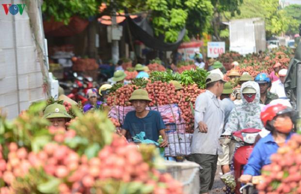 Bắc Giang thúc đẩy tiêu thụ vải thiều trước áp lực dịch bệnh Covid-19 (9/6/2020)