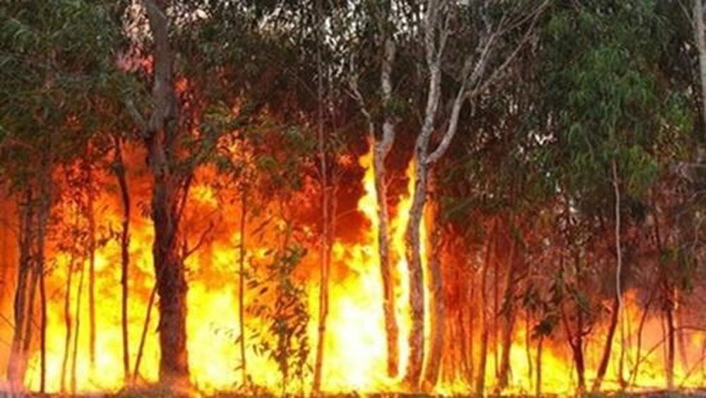 Nắng nóng và nguy cơ cháy rừng (3/6/2020)