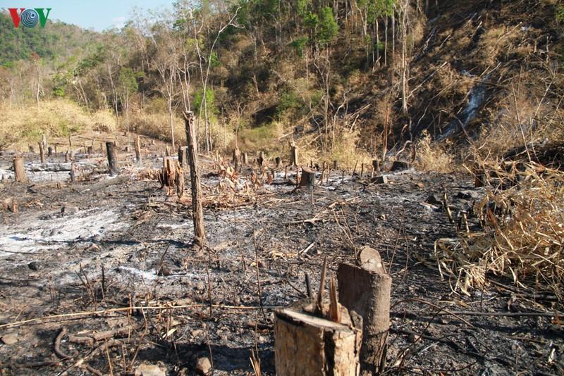 THỜI SỰ 12H TRƯA 23/6/2020: Trong một năm, khu vực Tây Nguyên mất gần 16 nghìn ha rừng tự nhiên và là điểm nóng phá rừng của cả nước.