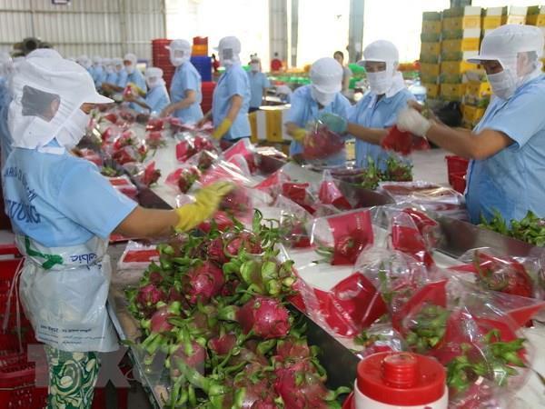 Đẩy mạnh xuất khẩu trái cây 6 tháng cuối năm 2020 (13/7/2020)