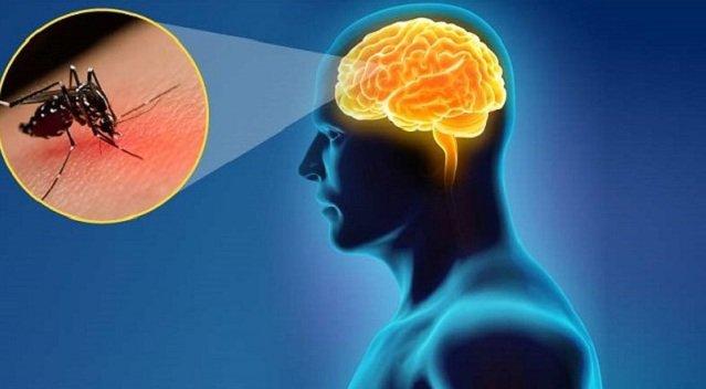 Cách phòng bệnh khi đến mùa viêm não Nhật bản (20/07/2020)