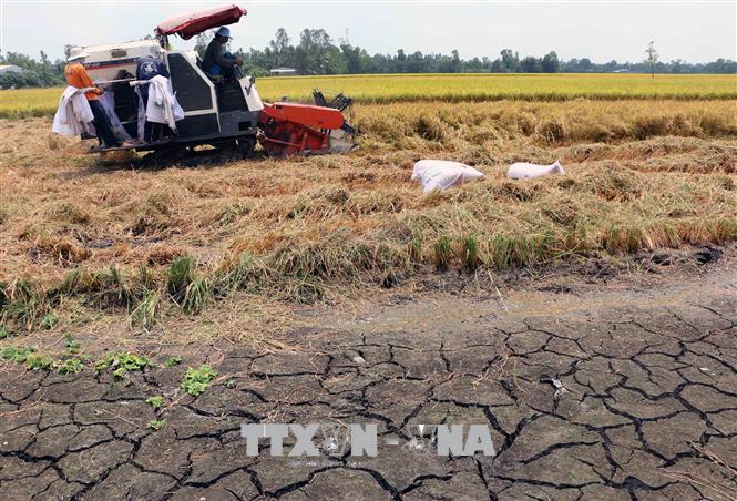 ĐBSCL: giải pháp phát triển nông nghiệp ứng phó với hạn mặn (2/7/2020)