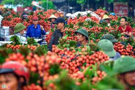Vụ vải thiều 2020 ở Bắc Giang: Thành công hơn mong đợi (9/7/2020)