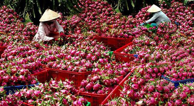 THỜI SỰ 6H SÁNG 25/8/2020: Hoa quả Việt Nam xuất khẩu trở lại sang Mỹ - tín hiệu tích cực cho ngành nông nghiệp